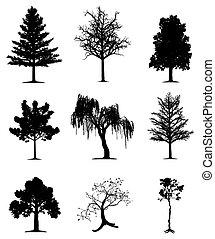 עצים, אוסף