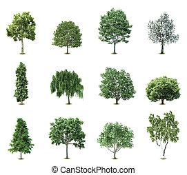 עצים., וקטור, קבע