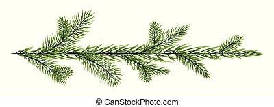 פ.י.ר., רקע לבן, הפרד, ענף