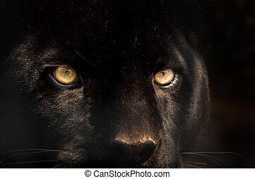 פנתר שחור