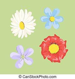 פרחים, קבע, צבע