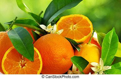 פרחים של תפוז, פירות