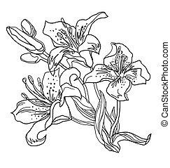 פרחים, sketch., מהיר, white., וקטור, הפרד, תאר, שושן, freehand