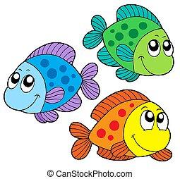 צבע, חמוד, דגים