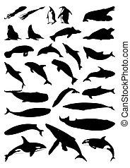 צלליות, וקטור, mammals., ים, דוגמה