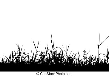 צללית, דשא, שחור