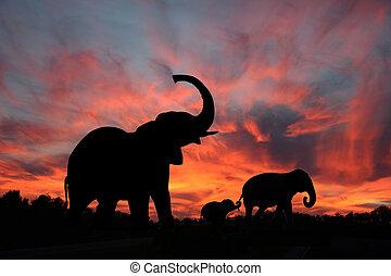 צללית, שקיעה, פילים