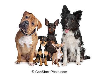 קבץ, חמשה, כלבים