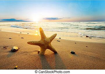 קיץ, החף, בהיר, כוכב ים