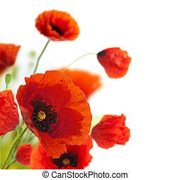 קישוט, -, פרחים, פרגים, פרחוני, שלוט, גבול, עצב