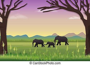 רקע, משפחה, נוף, meadow., פילים, טבע