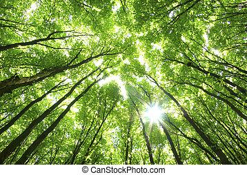 רקע, עצים ירוקים
