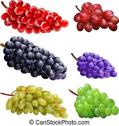 שונה, קבע, מיגוונים, ענבים