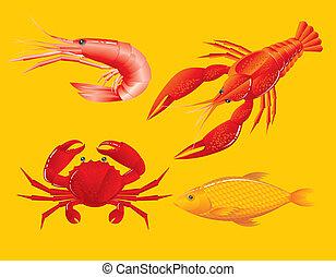 שרימפ, fish, סרטן, seafood:, כראוופיש