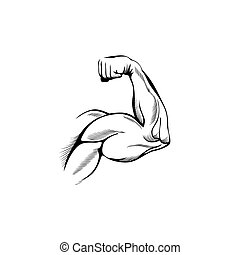 שרירים, חמש