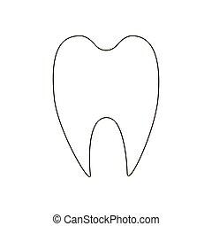 תאר, דוגמה, שן
