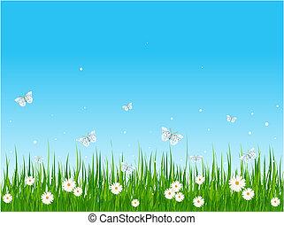 תחום, מכוסה עשב, פרפרים