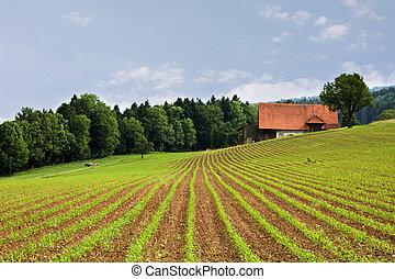 תחומים, חקלאות