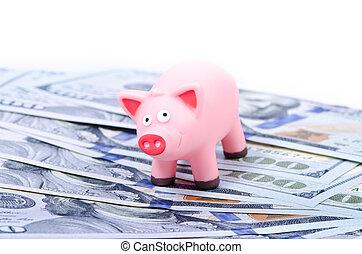 100, חשבונות, חזיר
