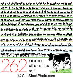 262, צלליות, קבע, בעל חיים