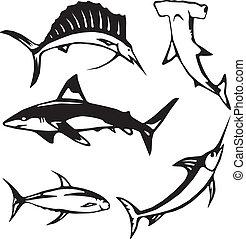 fish, גדול, אוקינוס, חמשה