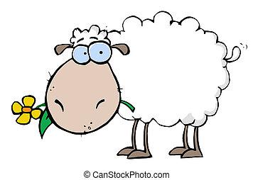 sheep, פרוח, פה