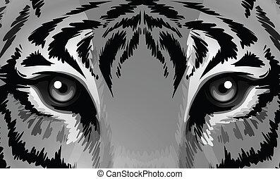 tiger, חד, עיניים