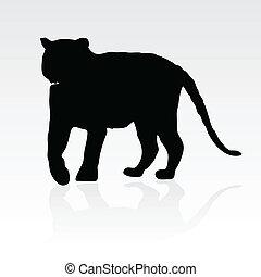 tiger, שחור, צללית, צעיר